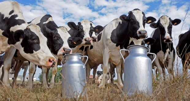 Banks working with dairy farmers