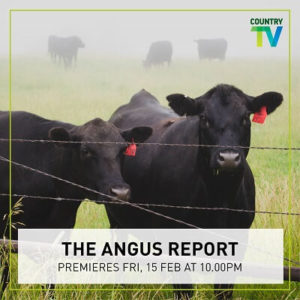 Angus-Report_sml