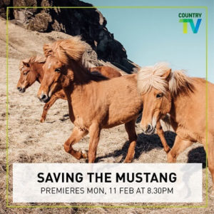 Saving-the-Mustang_sml